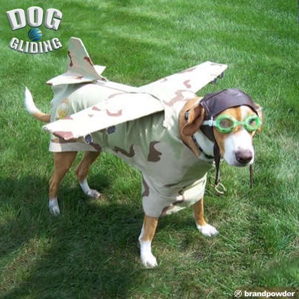 DOG GLIDING10