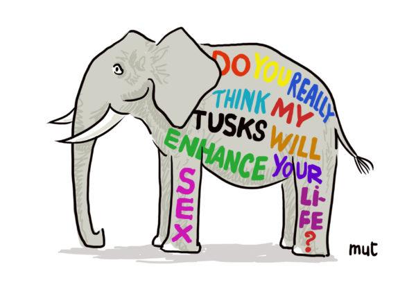 big elephant-s